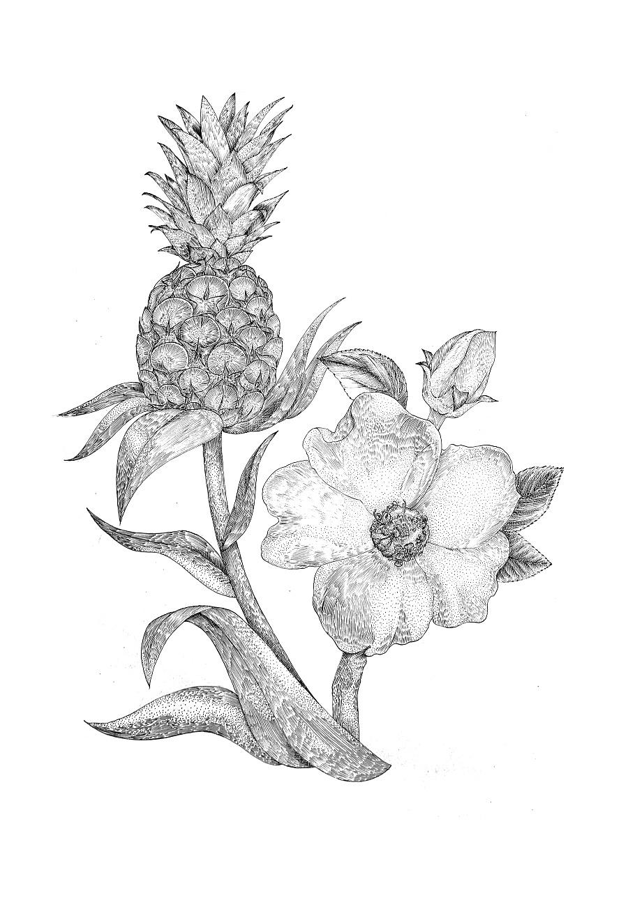 植物插画|商业插画|插画|猫夫人2016 - 原创设计作品