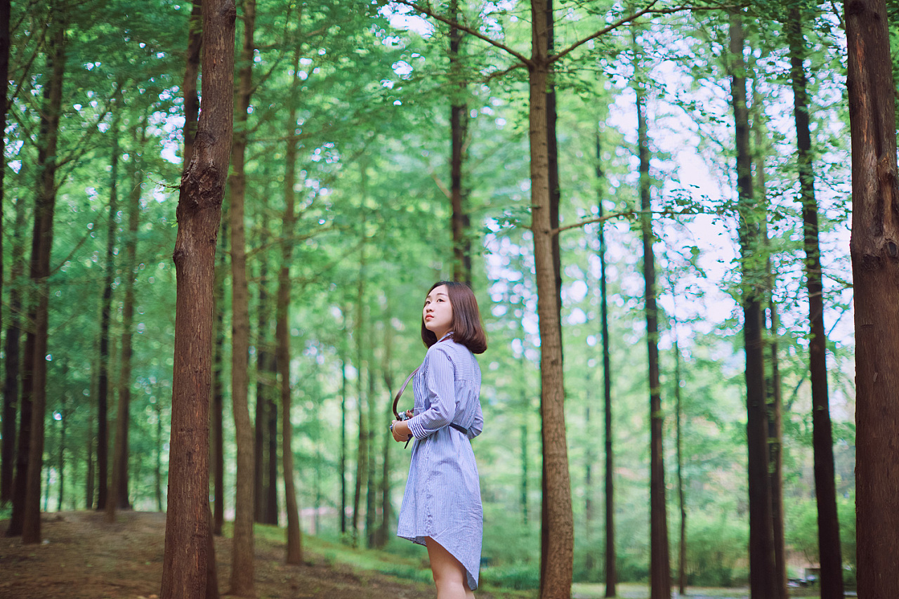 梦见大片树林葱郁茂盛 梦到高大的树林