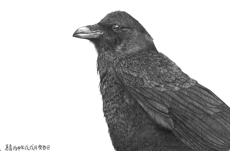标签:乌鸦插画手绘 作品信息 相关作品
