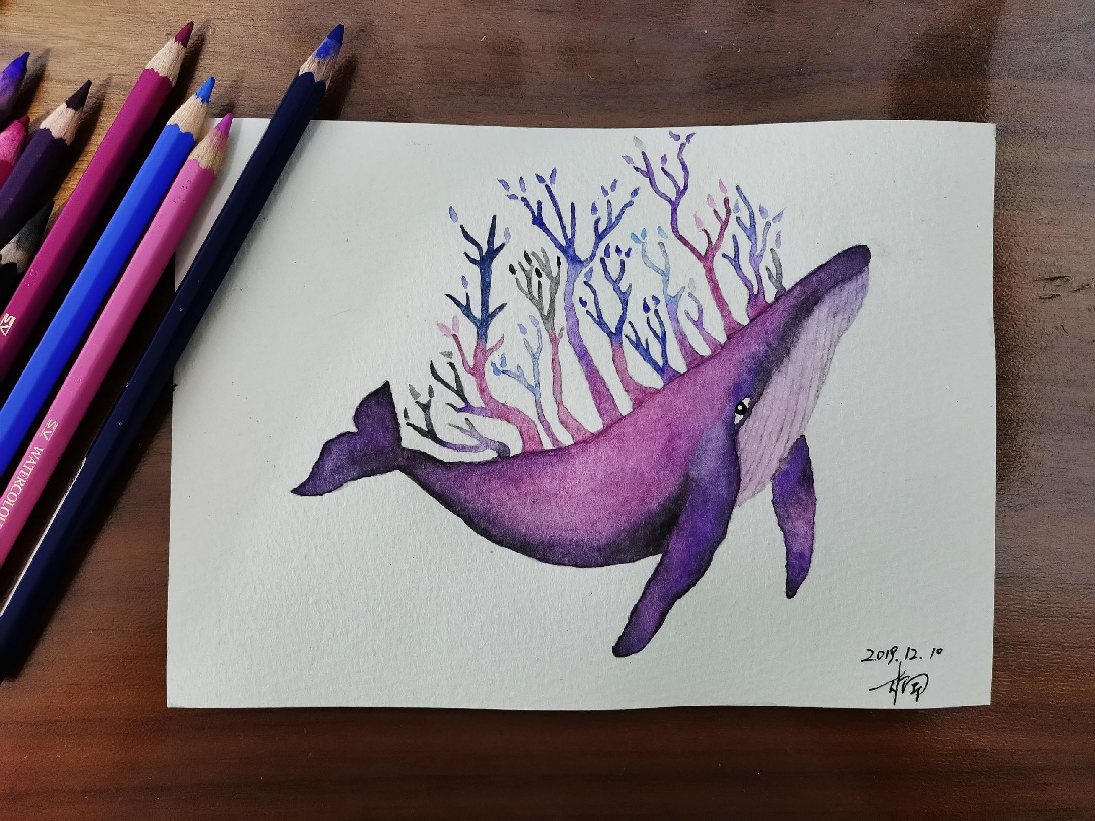 水溶彩铅鲸鱼图片