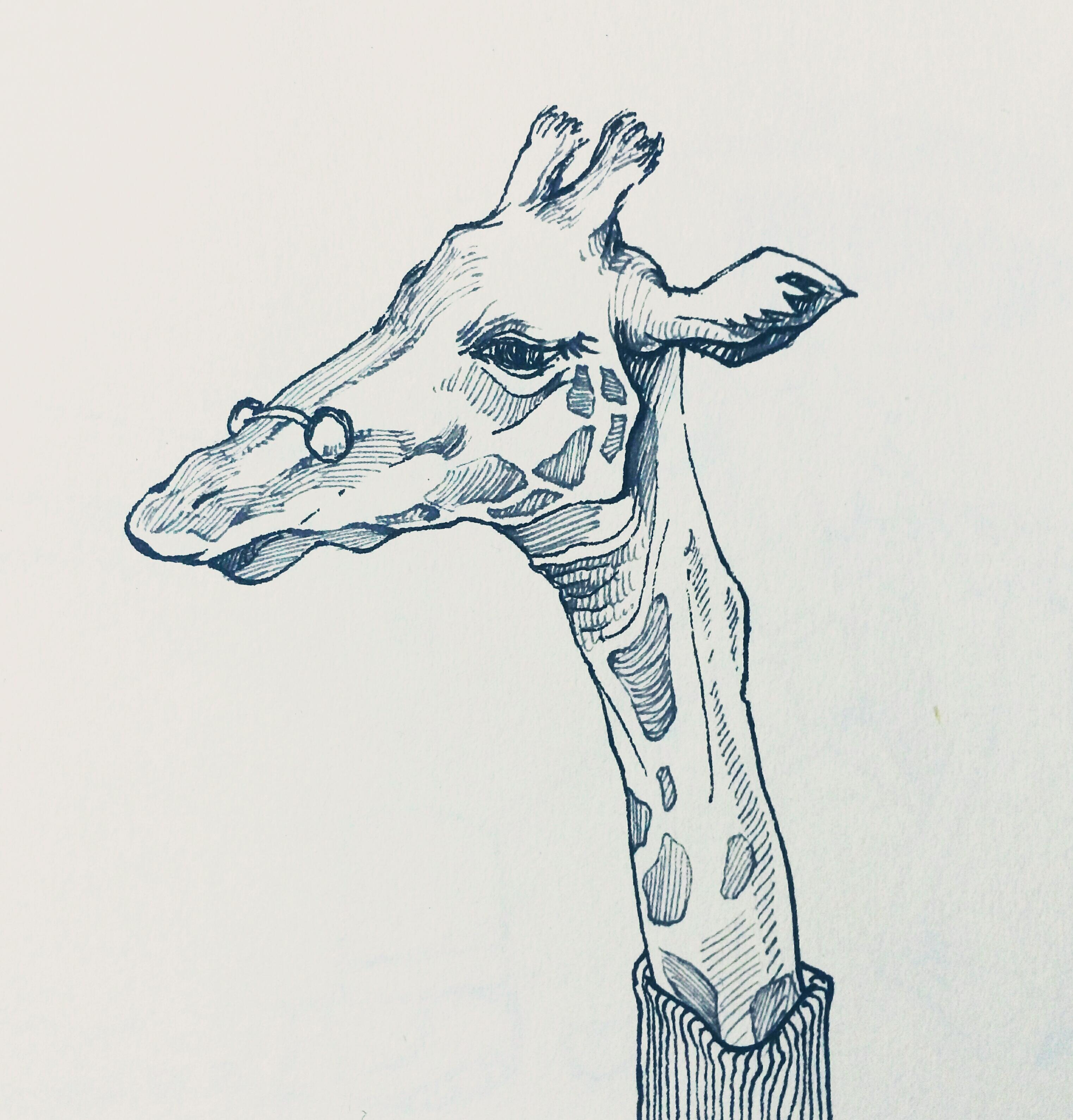 """钢笔手绘""""鹿"""""""
