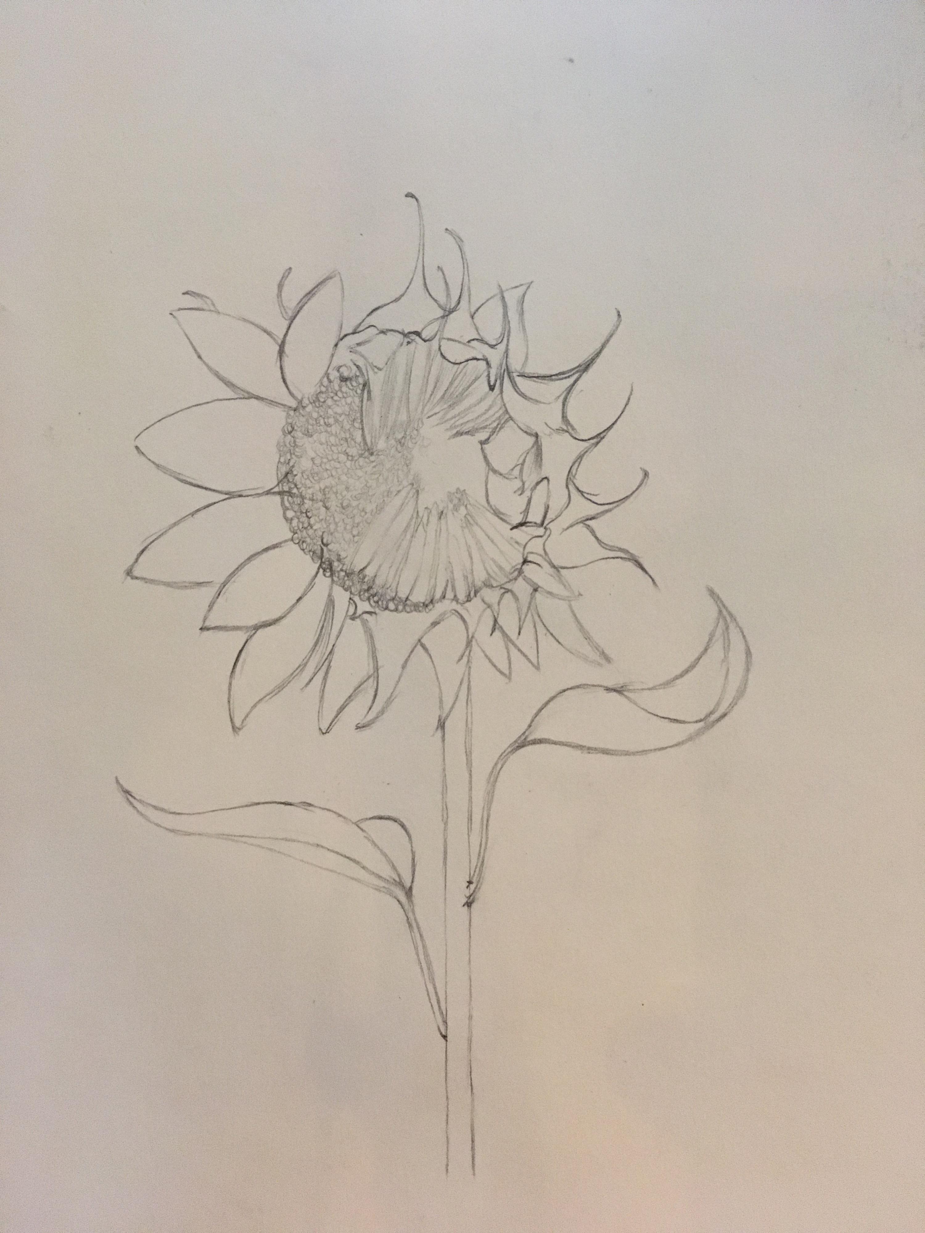 手绘彩铅希望之花