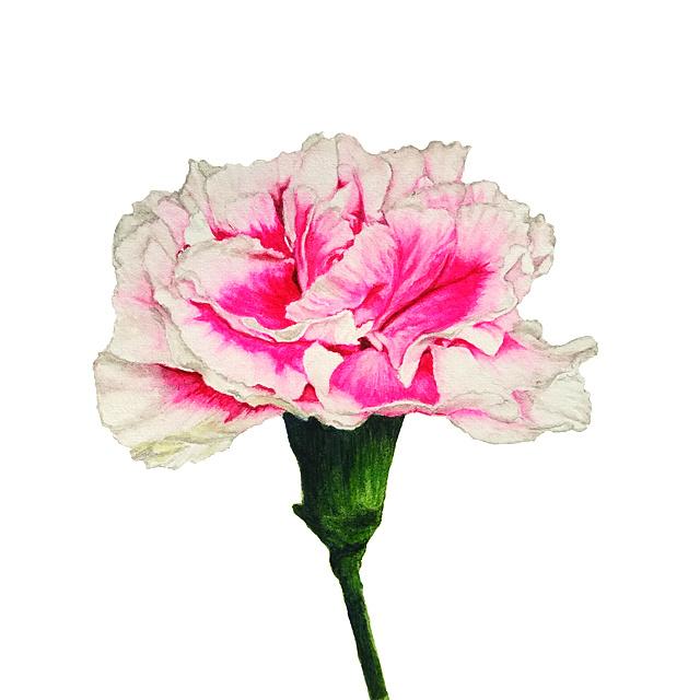 水彩写实花卉手绘