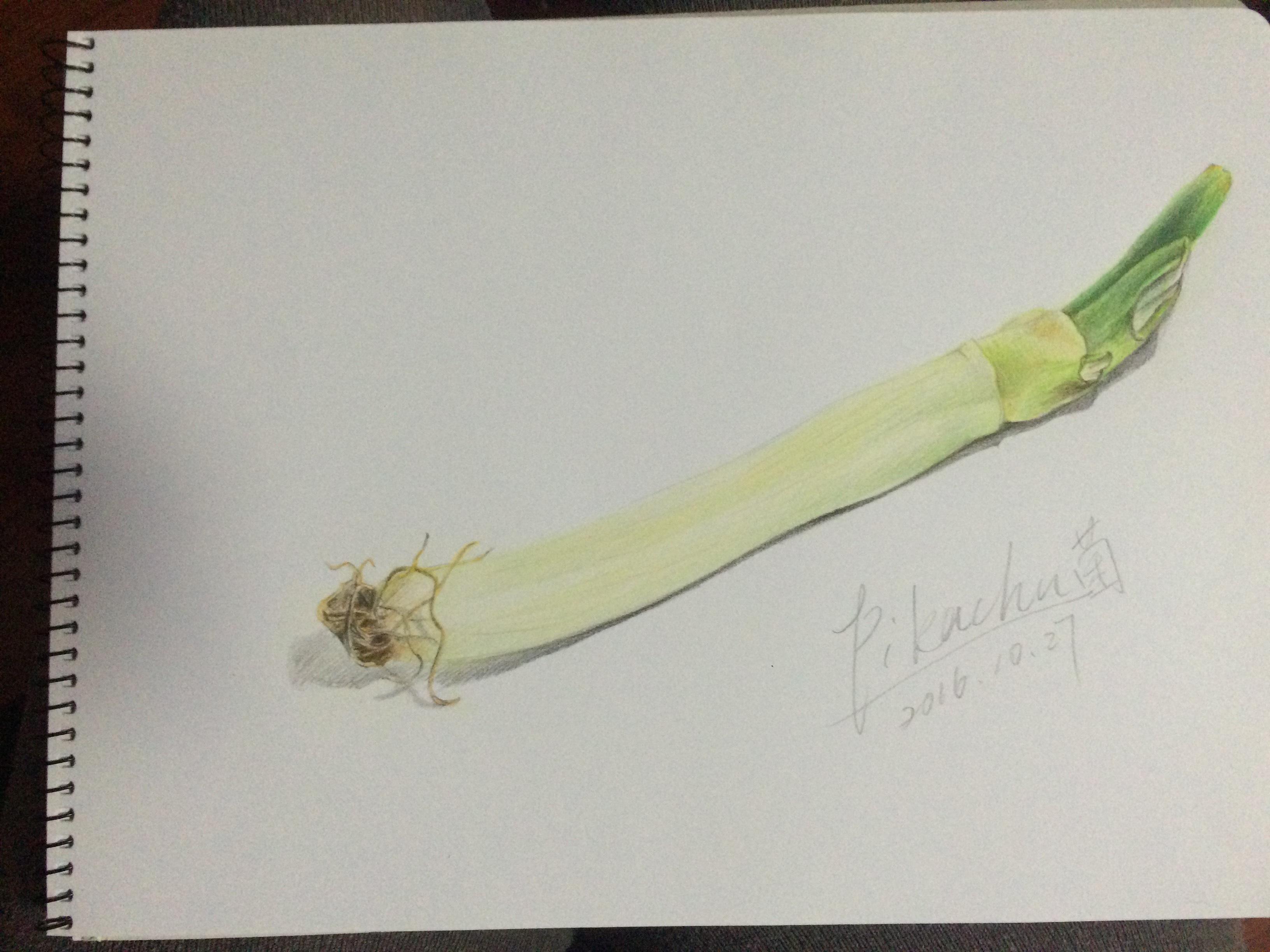 彩铅手绘练习--大葱