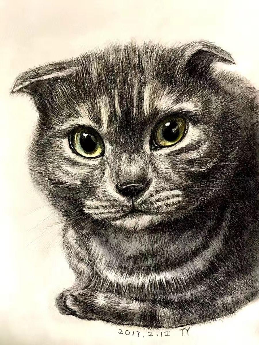 原创作品:手绘小猫咪