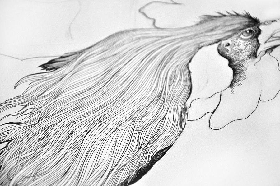 针管笔画——鸡