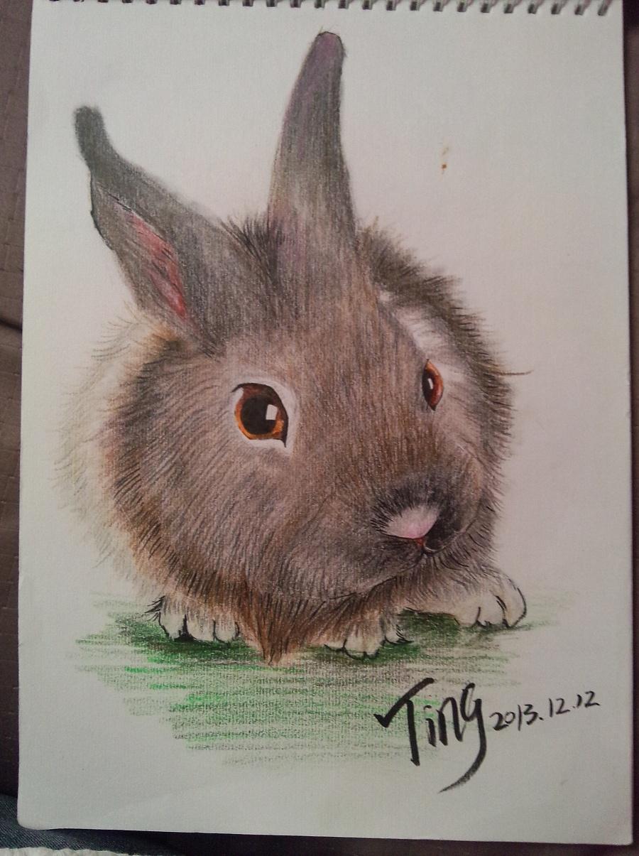 彩铅兔子简笔画