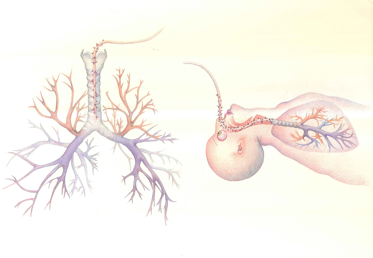 解剖创意手绘彩铅