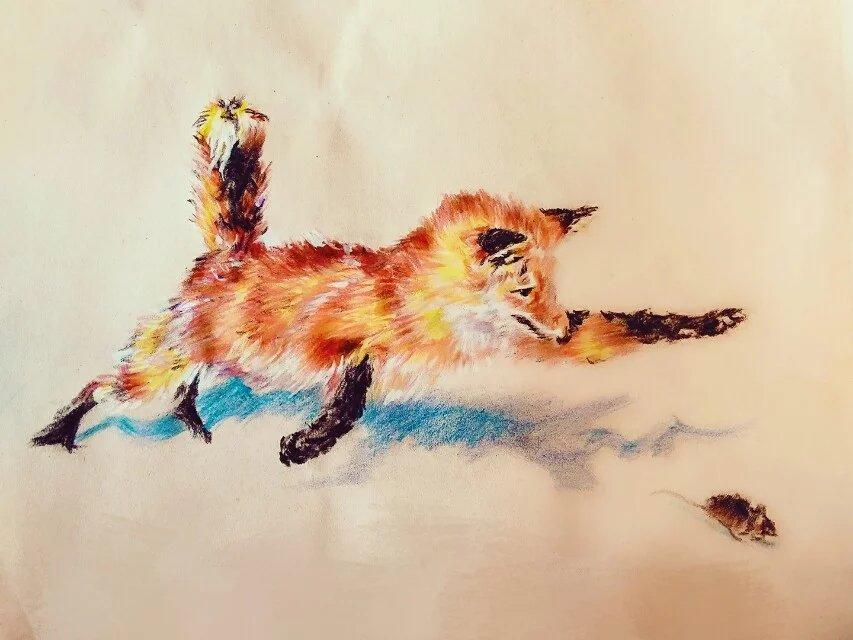 初学彩铅,动物手绘