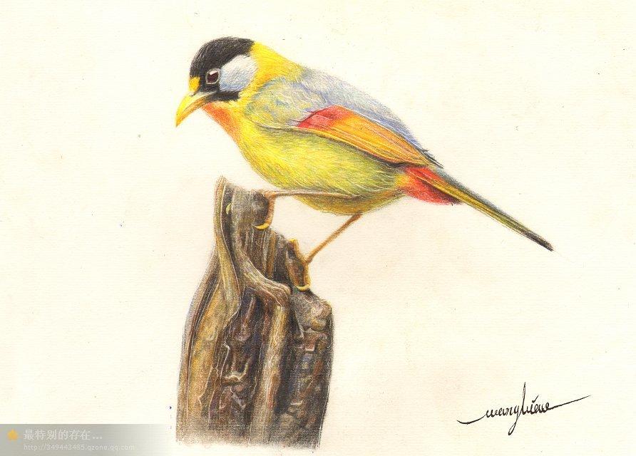 彩铅教程~鸟《红钩子》~家乡的一种小动物|彩铅|纯