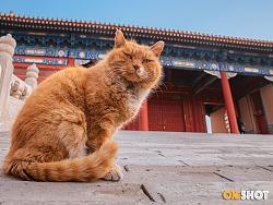 故宫猫丨纪念白点儿