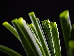 绿色新生活-蔬菜概念摄影