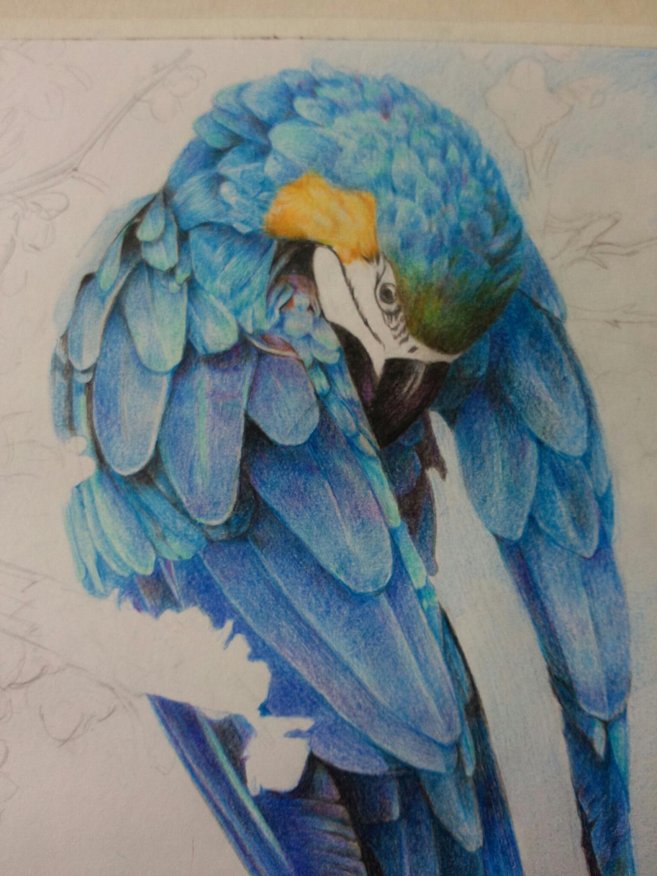 两张鸟类手绘《猫头鹰》《金刚鹦鹉》