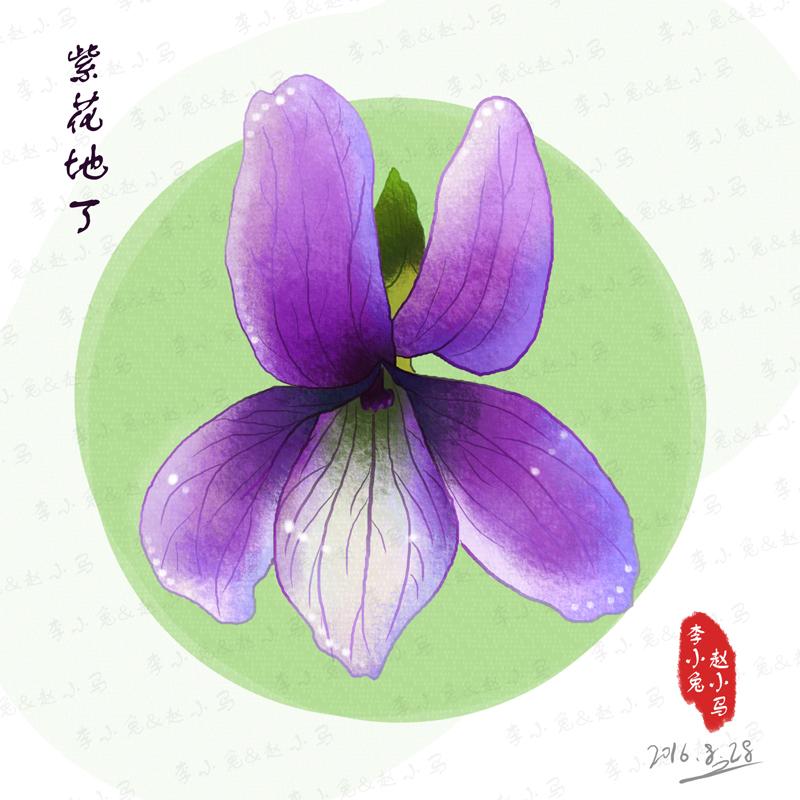 手绘植物-紫花地丁