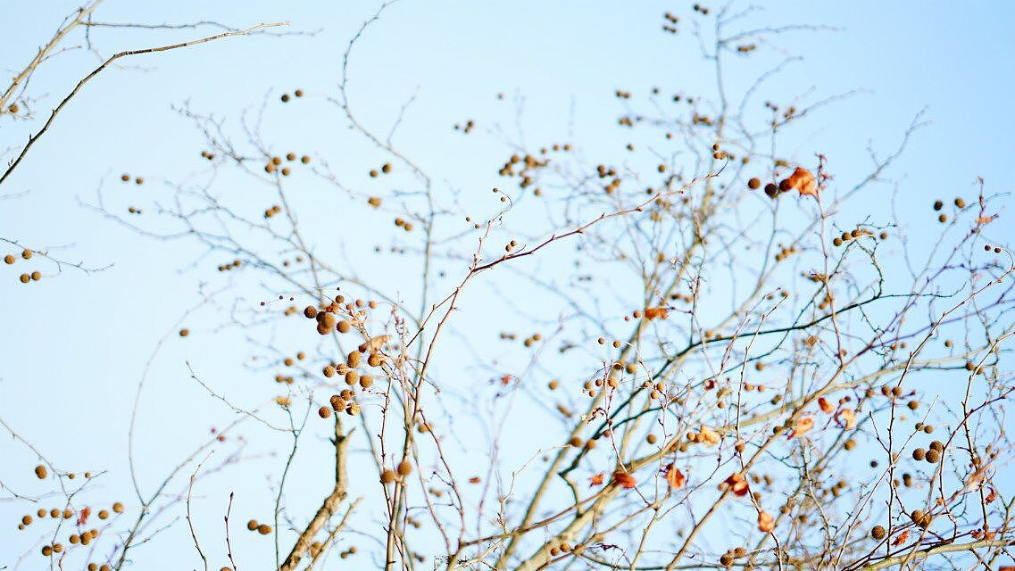 梅花树怎么画简笔画