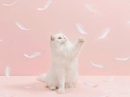 【摄影】少女心炸裂!!!粉嫩嫩!!火烈鸟逗猫棒!