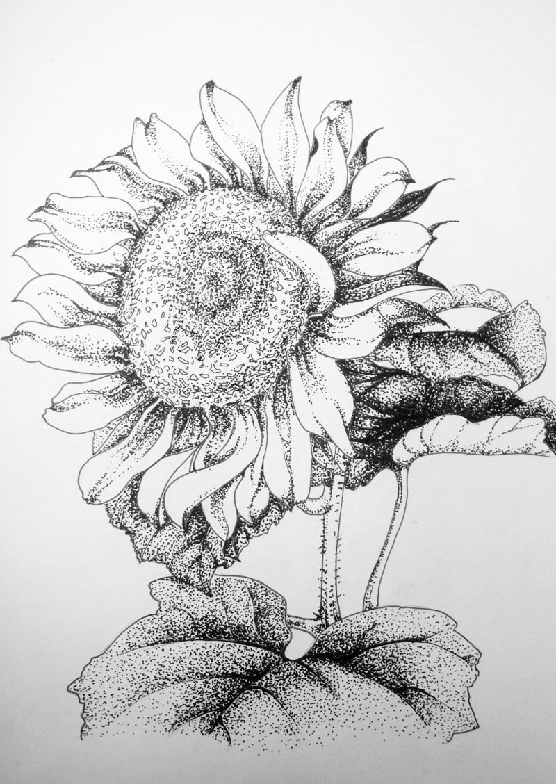 太阳花唯美简笔图