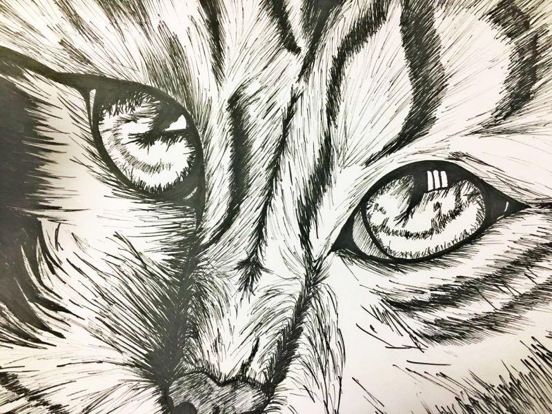 针管笔手绘 猫|绘画习作|插画|ppappacots