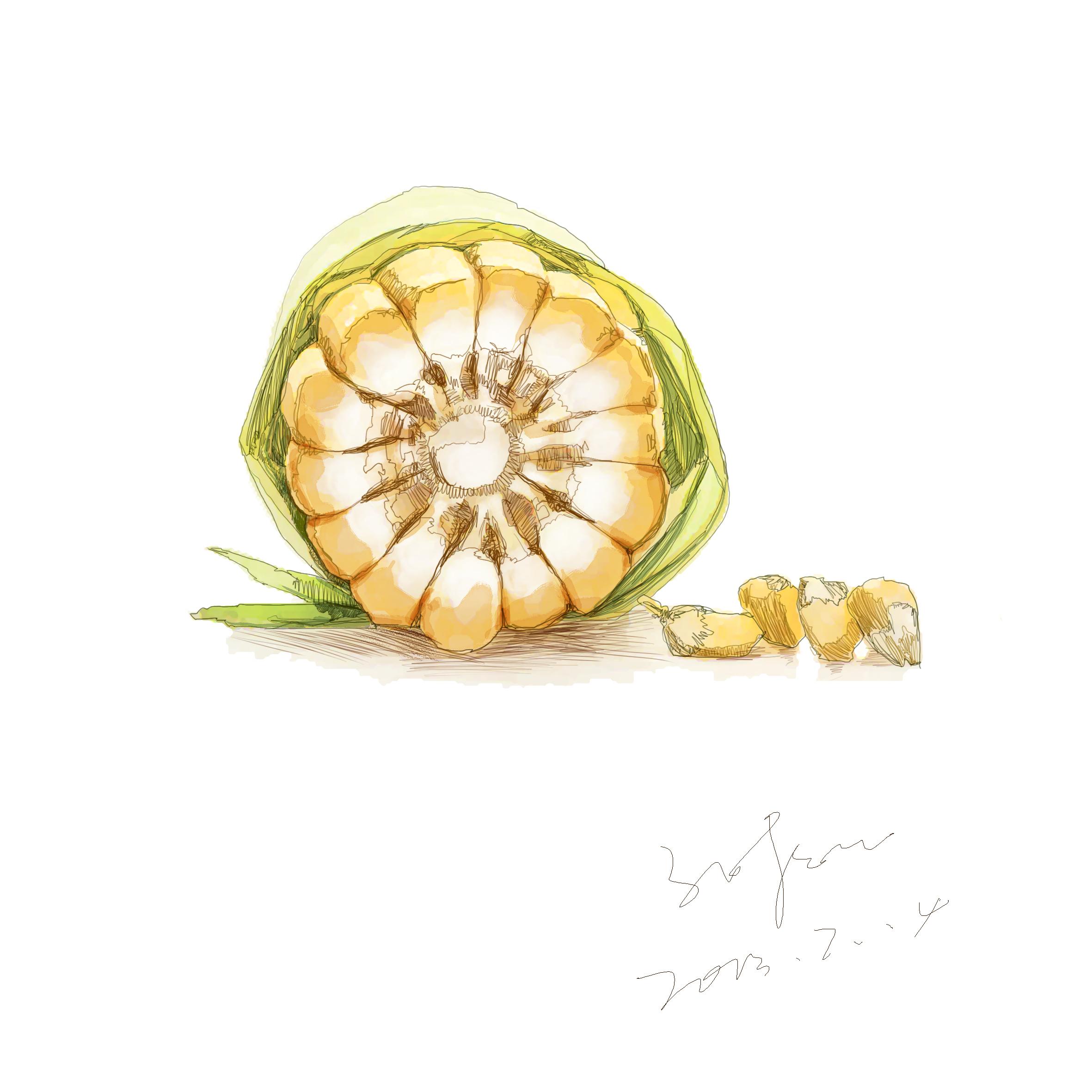 手绘水果蔬菜