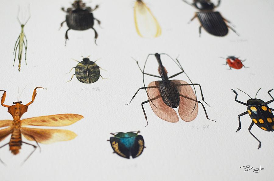 手绘昆虫|水彩|纯艺术|笔记自然工作室