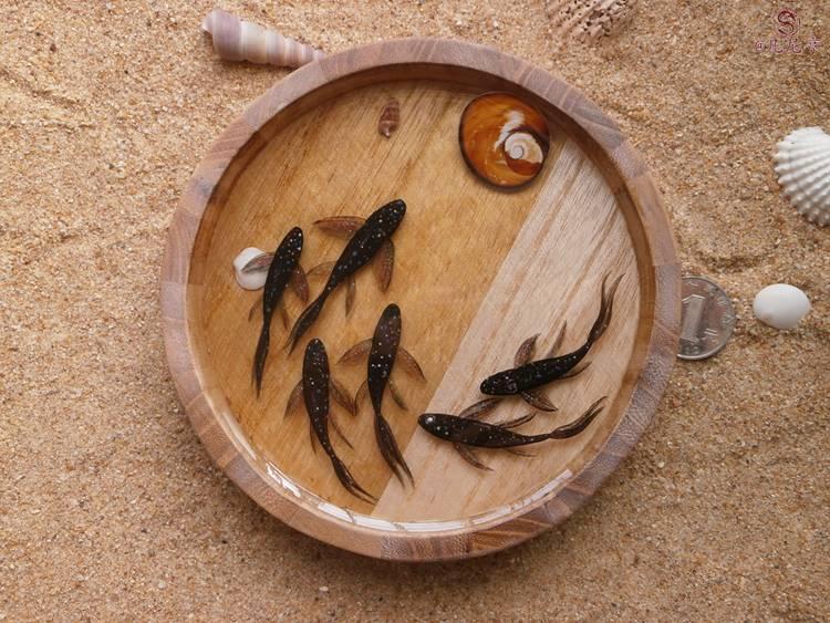 星空鱼 凡尼亨3d树脂画鱼|手工艺|其他手工|凡尼亨图片