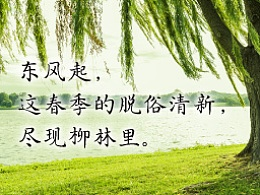 DynaFont古籍字体──华康古籍糸柳