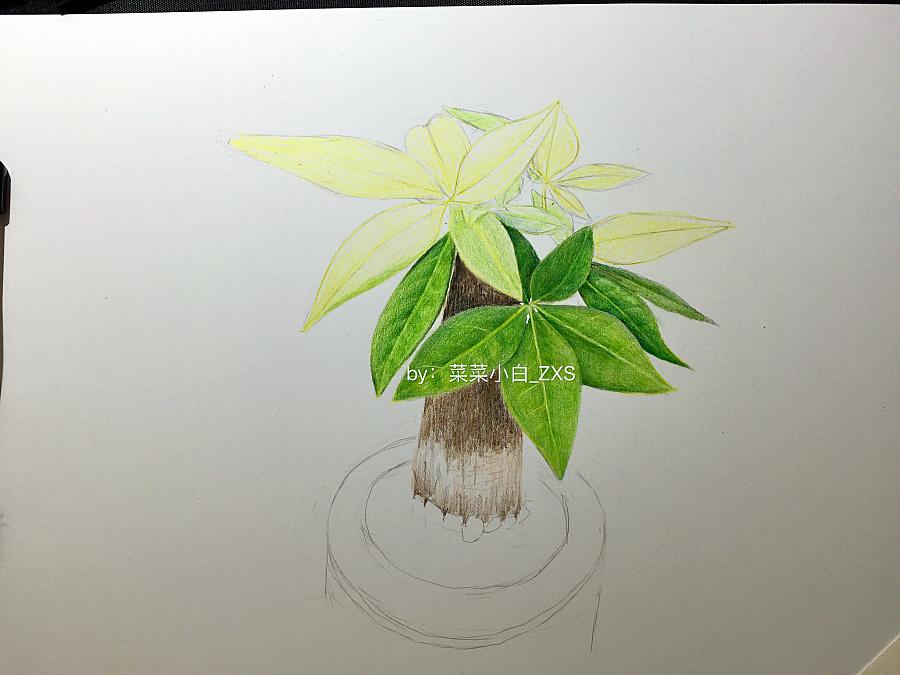 彩铅手绘—发财树