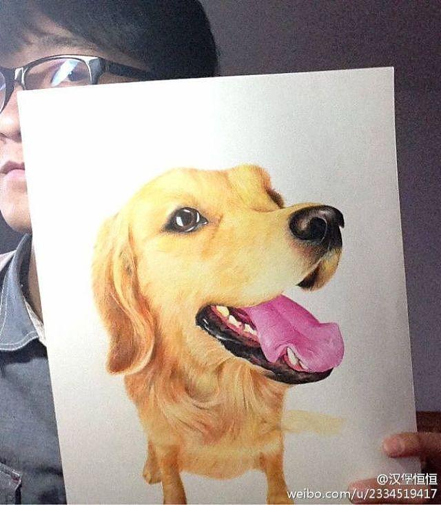 原创作品:手绘金毛犬