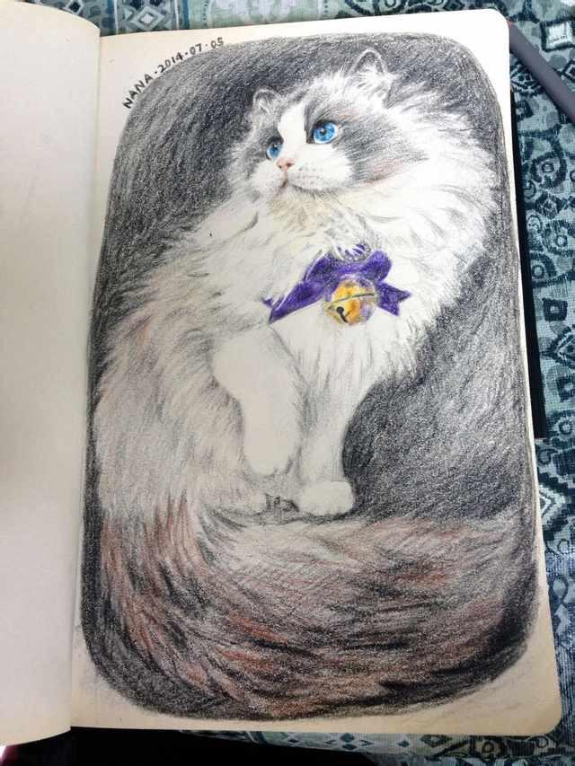 壹条布匹偶猫|扦画习干|扦画|娜娜酱酱 - 原创设计