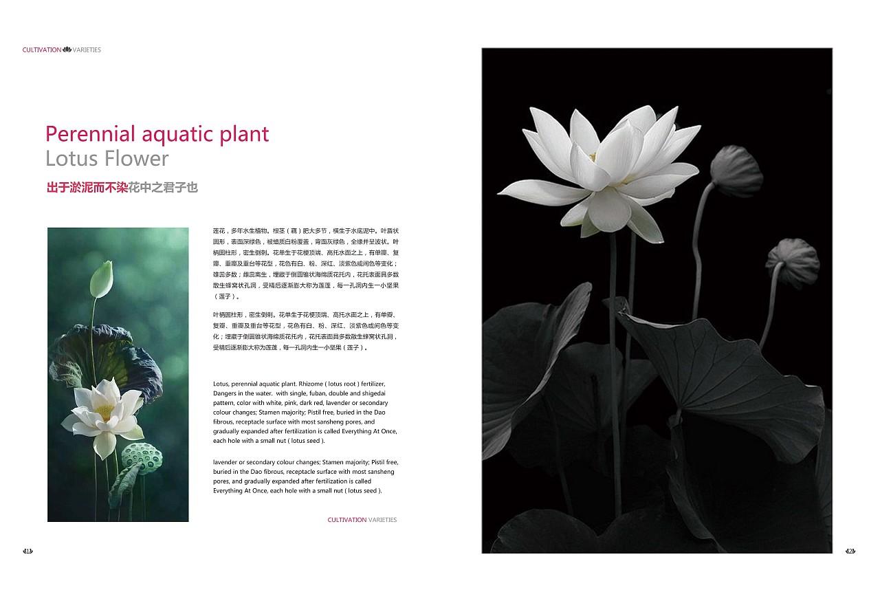 莲--书籍排版|平面|书装/画册|丶青 - 原创作品图片