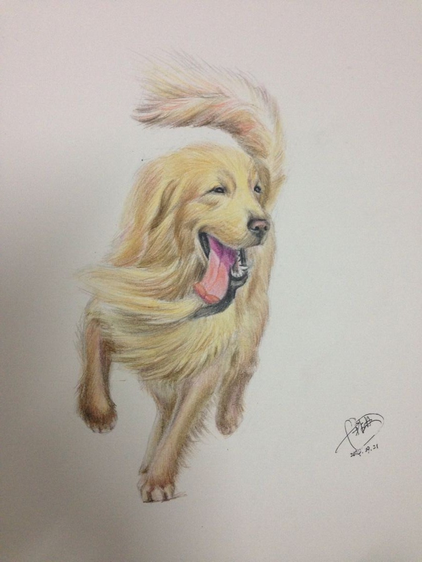 画画萌系狗