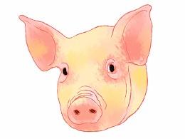 猪年快到了