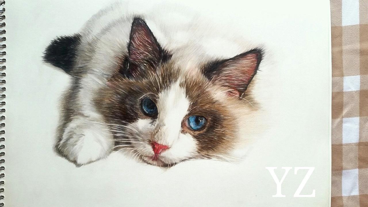 彩铅手绘画作《布偶猫》材料:48色红盒辉柏嘉 三幅霹雳马132色彩铅