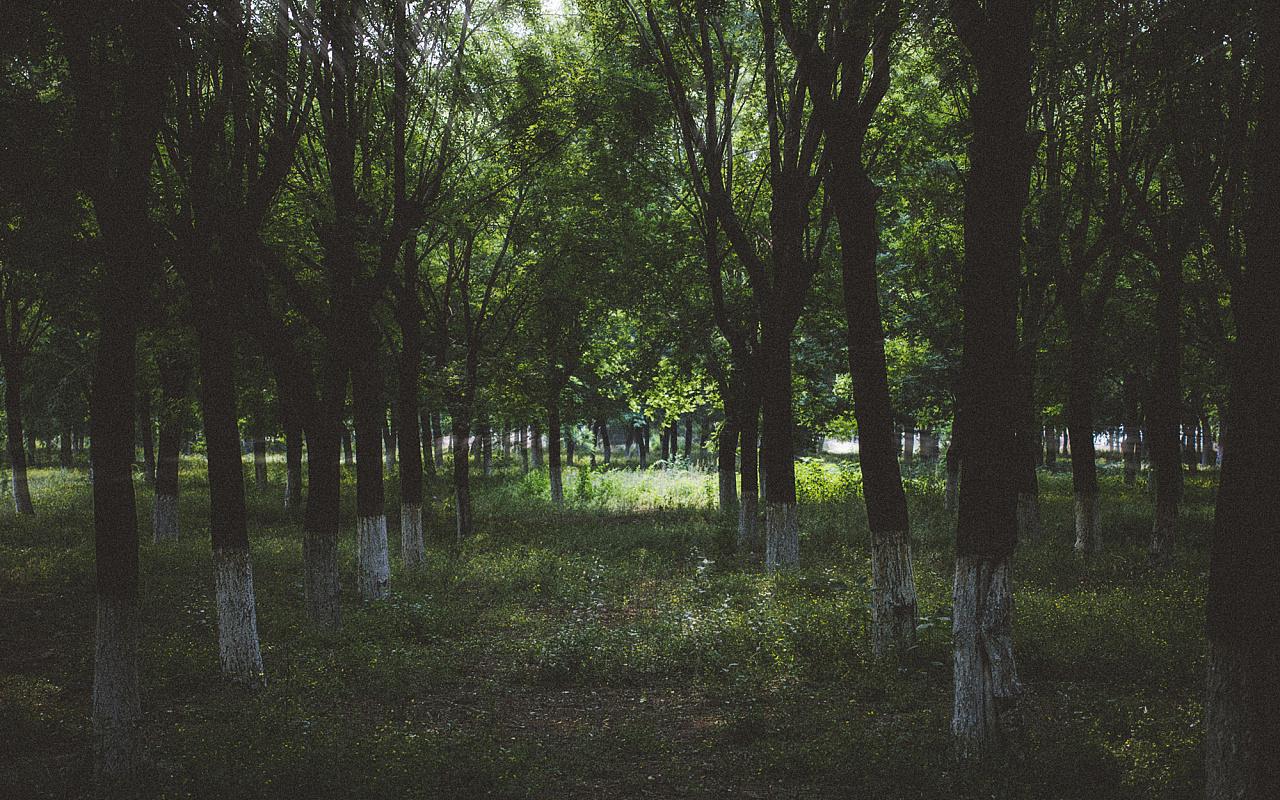 夏季校园图片