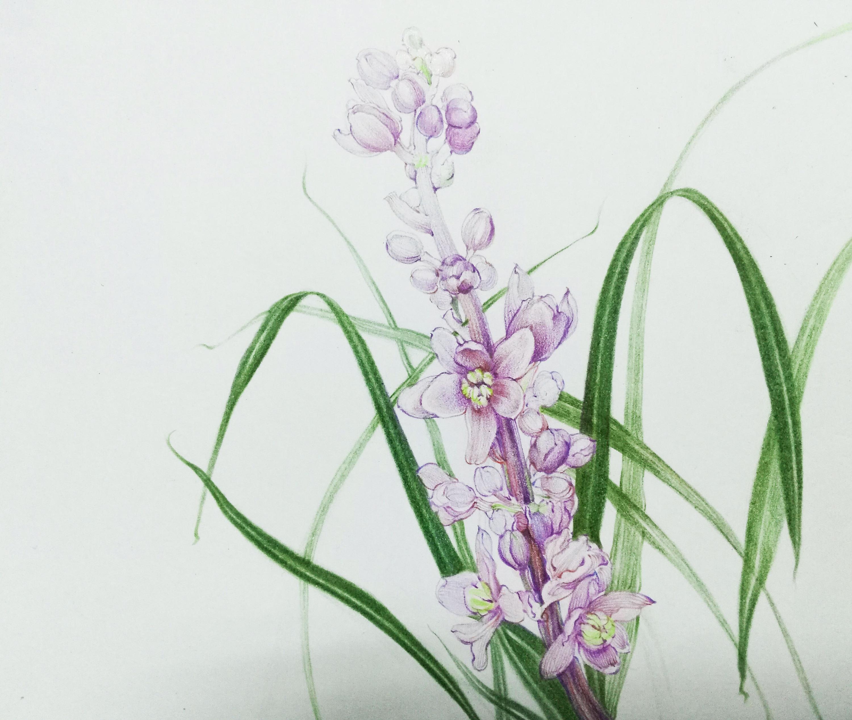 写生彩铅花卉图片