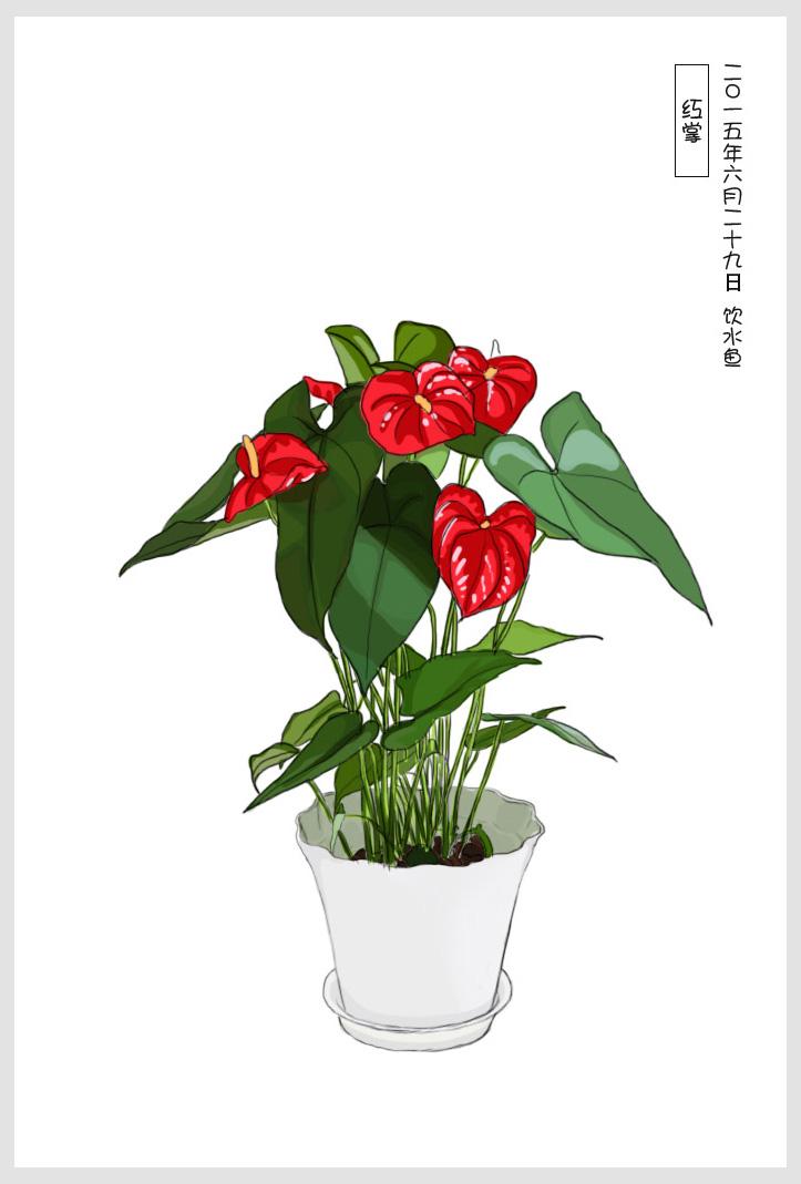 手绘常见室内小盆栽|插画习作|插画|cxf饮水鱼