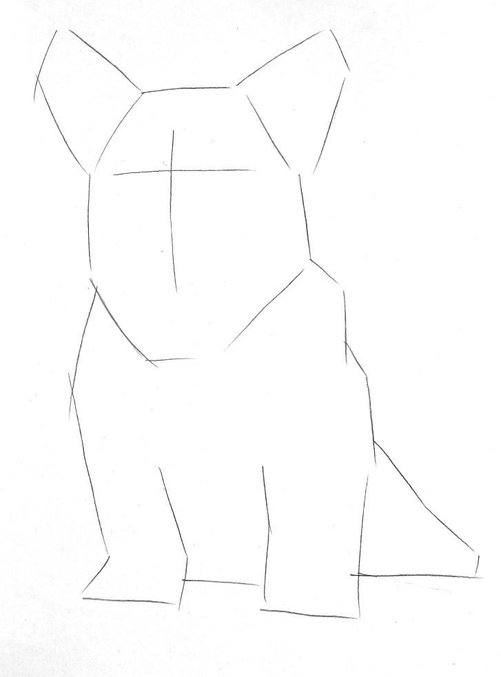 彩色铅笔画步骤教程:柯基犬的画法