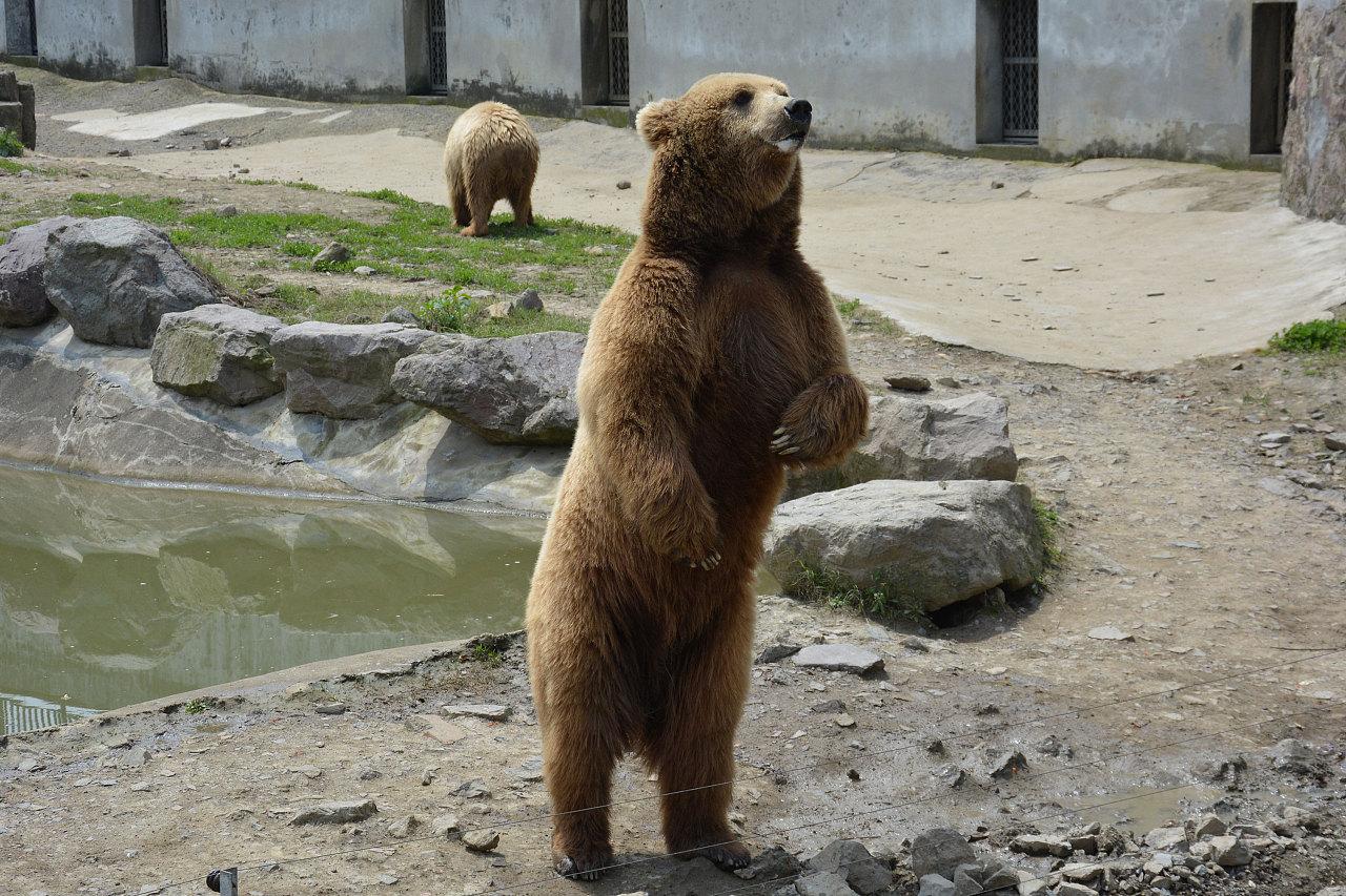 宁波雅戈尔动物园