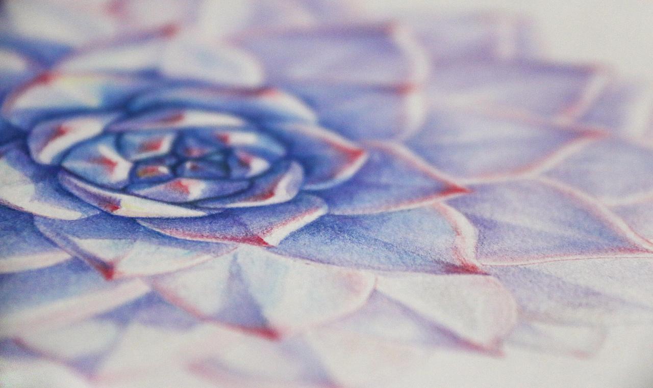 手绘多肉植物——《蓝鸟》|纯艺术|彩铅|鸩山 - 原创