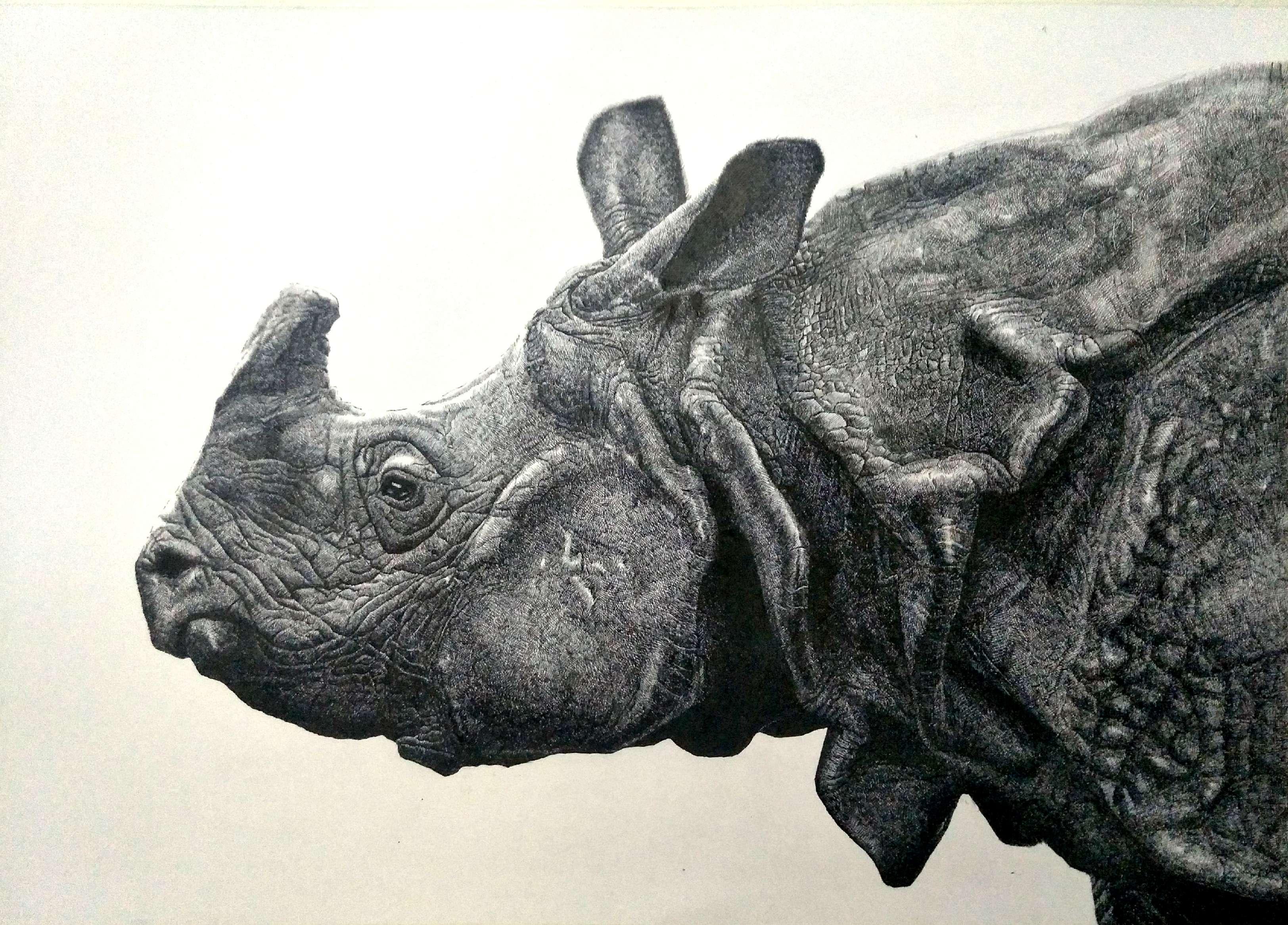 初夏~盛夏 重量级动物钢笔画