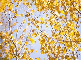 秋天的午后时光