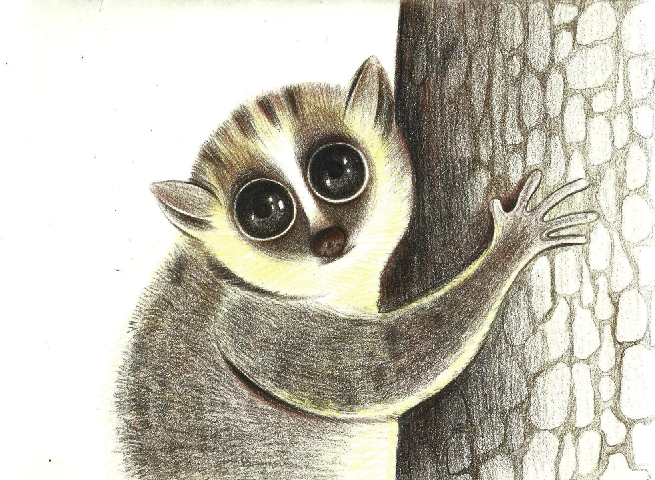 手绘彩铅动物|商业插画|插画|小妖521