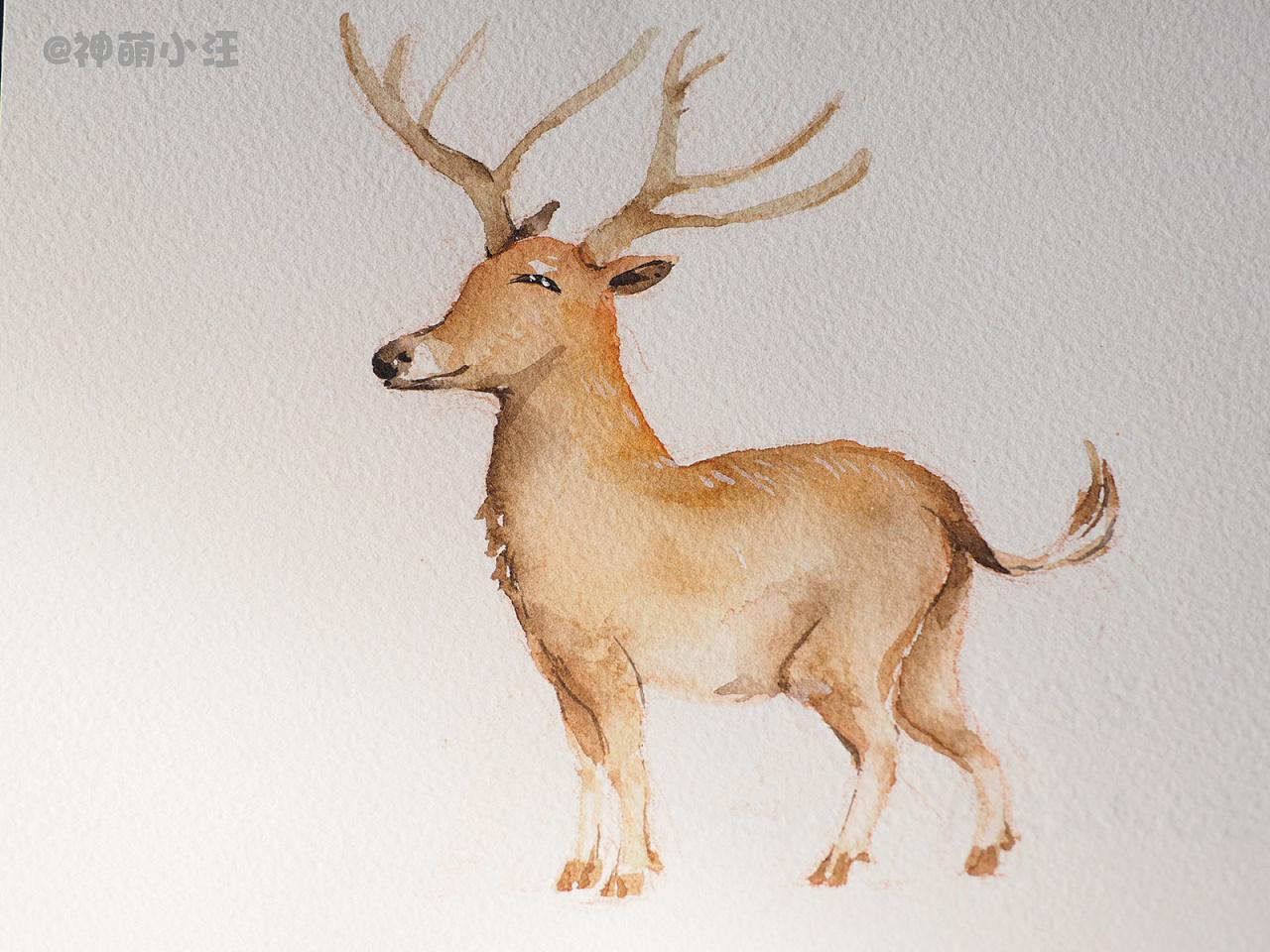 壁纸 动物 鹿 1280_960