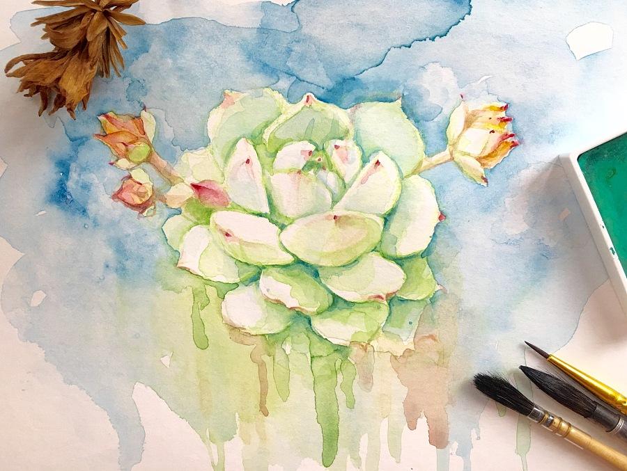 水彩手绘多肉植物   静夜 其他绘画 插画 魂儿