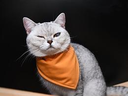 猫店长驾到!!!
