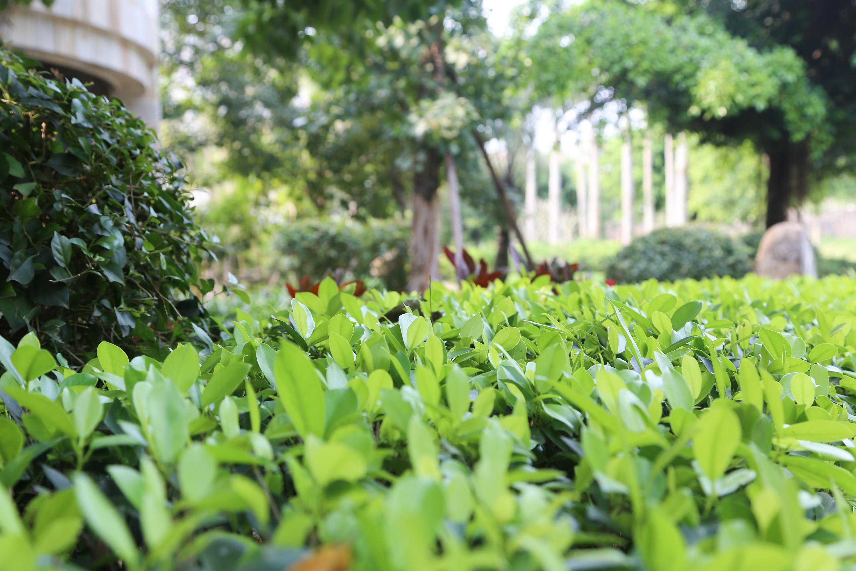 园林绿色植物