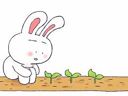 #小矛毁童年#小白兔和小灰兔的故事6。 