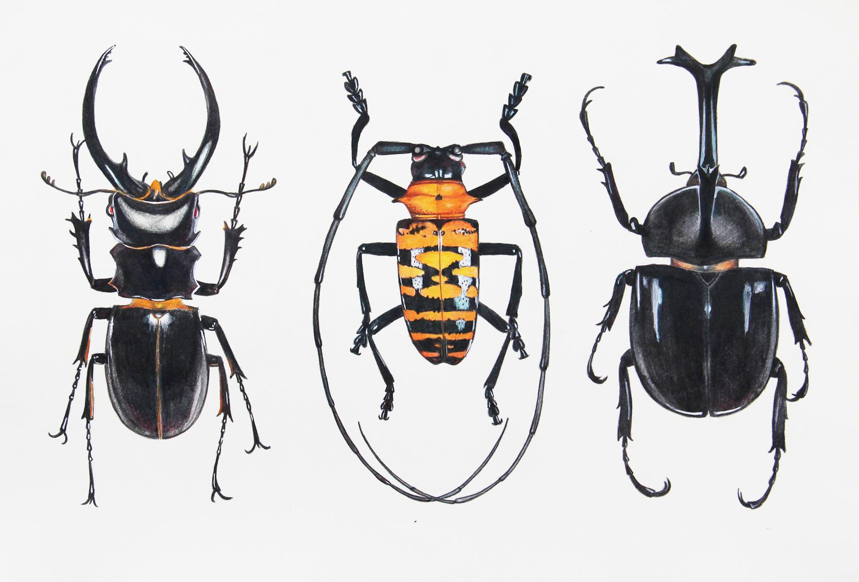 昆虫图片大全手绘