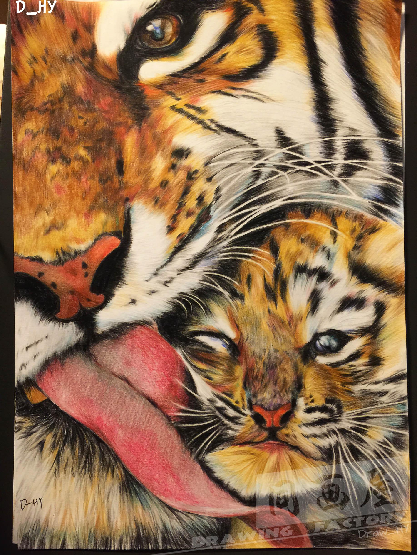 《虎》d_hy(彩铅画)|纯艺术|彩铅|draw_hy - 原创作品图片