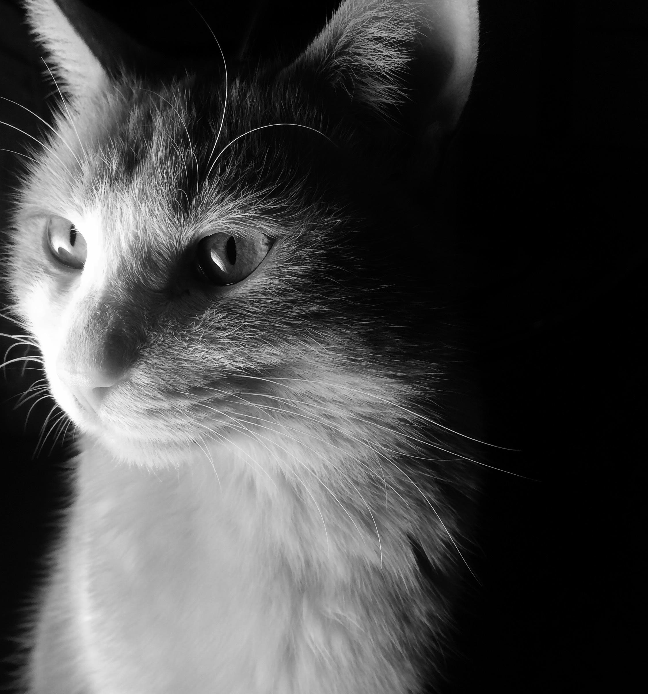 喵肖像|摄影|动物|夜半熊猫眼 - 原创作品 - 站酷